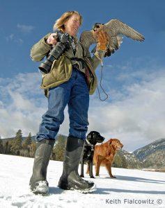 Kate Davis and her Falcon Sibley Birds of Prey Photography -