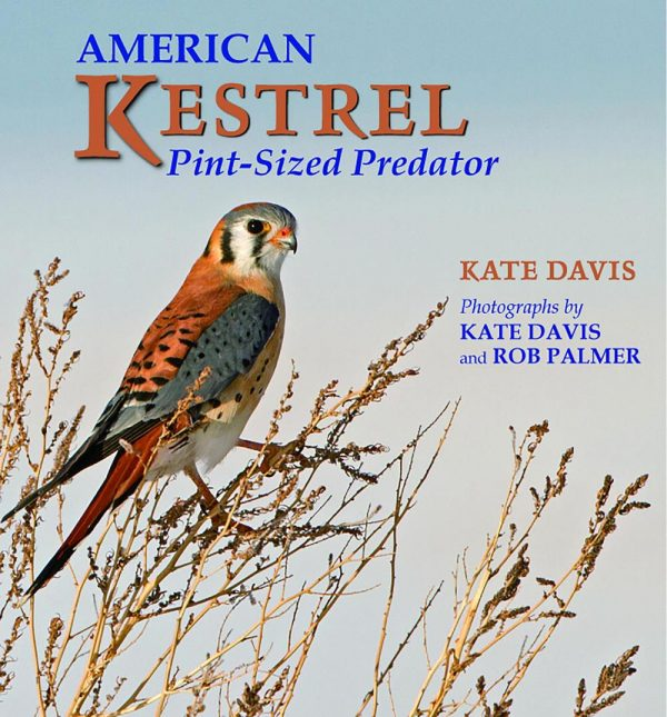 Kate Davis Books - American Kestrel - Pint-sized Predator - Raptor Photography Books - American Kestrel - Pint-sized Predator