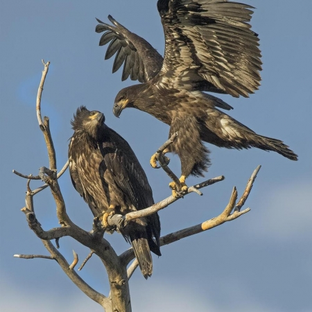 Images of Birds of Prey