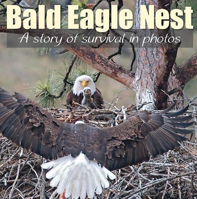 Kate Davis Books - Bald Eagle Nest - Raptor Photography Books - Bald Eagle Nest: : A story of survival in photos